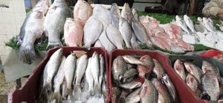 تعرف على أسعار السمك اليوم الخميس الموافق الرابع من شهر يونيو